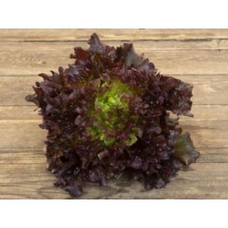 Salat rot